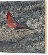Winter Redbird Wood Print