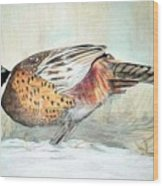 Winter Ringneck Wood Print