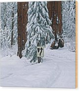 Winter Road Into Sequoia National Park Wood Print
