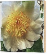 Winter Rose Wood Print
