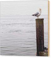 Winter Seagull On Long Beach Island Wood Print