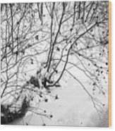 Winter Shrubs, New Hampshire Wood Print