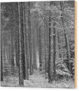 Winter, Slaley Woods Wood Print