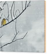 Winter Snow With A Touch Of Goldfinch For Color Wood Print by Laura Mountainspring