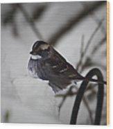 Winter Sparrow Wood Print