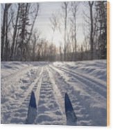 Winter Sport X-country Skis In Sunny Forest Tracks Wood Print