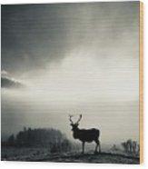 Winter Stag Wood Print