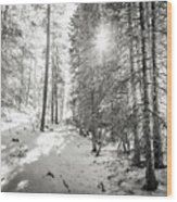 Winter Sunshine Forest Shades Of Gray Wood Print