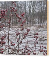 Winter Time Frozen Fruit Wood Print