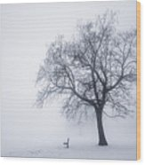 Winter Tree And Bench In Fog Wood Print