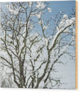 Winter Tree At Berry Summit Wood Print