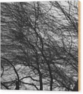 Winter Tree Branches Wood Print