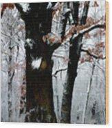 Winter Tree-left Wood Print