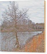 Winter Tree On Pond Shore Wood Print