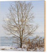 Winter Tree On Shore Wood Print