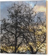 Winter Trees At Sunset Wood Print