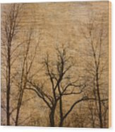 Winter Trees In The Bottomlands 2 Wood Print