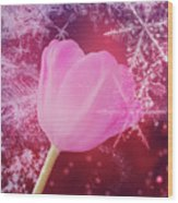 Winter Tulip Red Theme Snow Wood Print