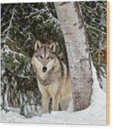 Winter Visitor Wood Print