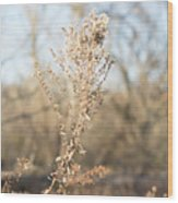 Winter Weeds Wood Print