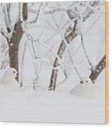Winter Whites Wood Print