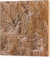 Winter Willow Branches Wood Print