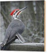 Winter Woodpecker Wood Print