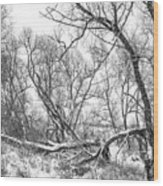 Winter Woods On A Stormy Day 2 Bw Wood Print