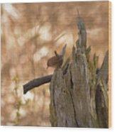 Winter Wren Wood Print