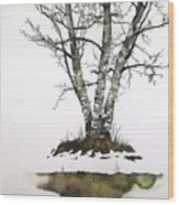 Winters Birch Wood Print