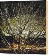 Winters Dawn Wood Print