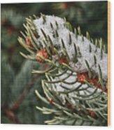 Winter's Fling Wood Print