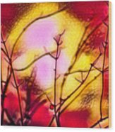 Winter's Glow Wood Print