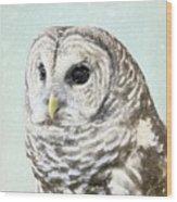 Winters Owl, Barred Hoot Owl Winter Snow Falling Wood Print