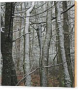 Wintery Day Wood Print