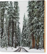 Wintry Forest Drive Wood Print