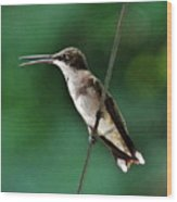 Wire Walker Young Male Ruby-throated Hummingbird    Wood Print