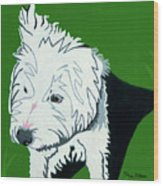 Wirehaired Jack Russell Terrier Wood Print