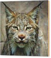 Wise Bob Cat Wood Print