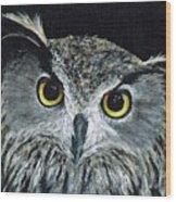 Wise Eyes II Wood Print