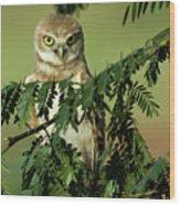 Wise Watcher Wood Print