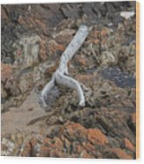 Wish Bone - Driftwood Wood Print