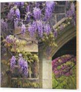 Wisteria Blossom Wood Print