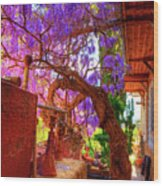 Wisteria Canopy In Bisbee Arizona Wood Print