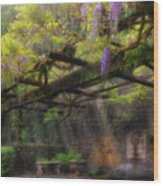 Wisteria Flowers Blooming On Trellis Over Water Fountain Wood Print