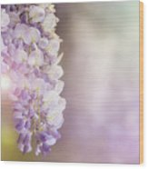 Wisteria Flowers In Sunlight Wood Print