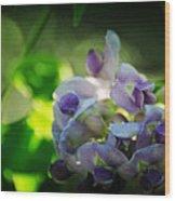 Wisteria Frutescens Amethyst Falls Wood Print