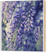 Wisteria Whimsy Wood Print