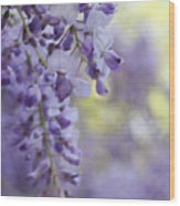 Wisteria's Soft Floral Whispers Wood Print