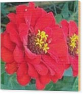 With Beauty As A Pure Red Rose Wood Print